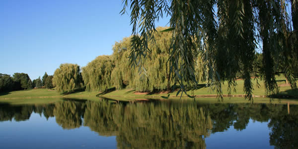 a willow tree and its reflection in a small lake or pond