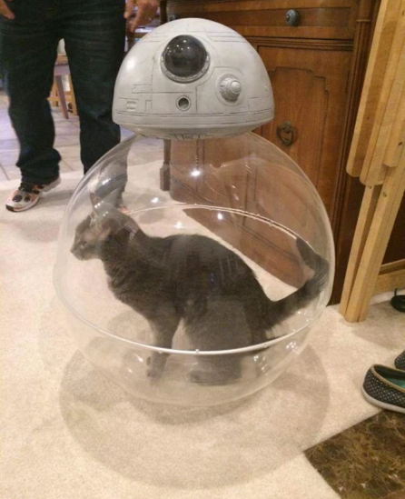 How BB-8 works cat