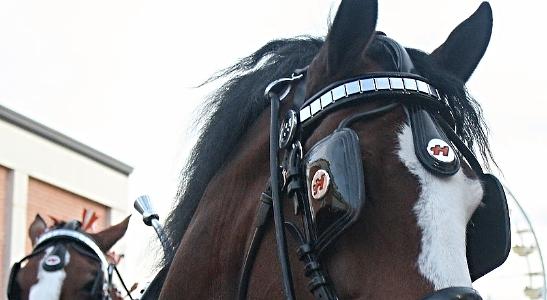 Binkered horse