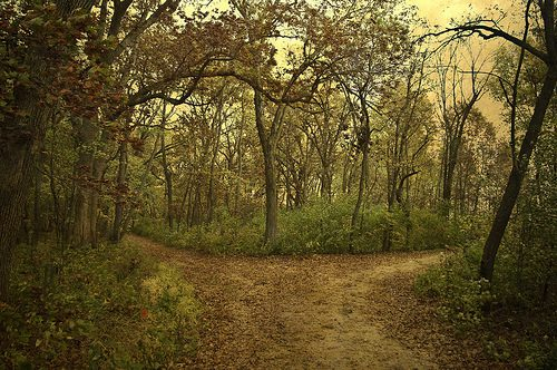 photo credit: Two Roads Diverged in Yellow Wood via photopin (license)