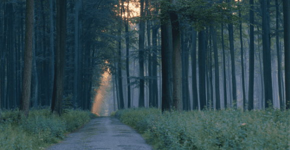 wooded pathway to illustrate a pathway toward societal justice