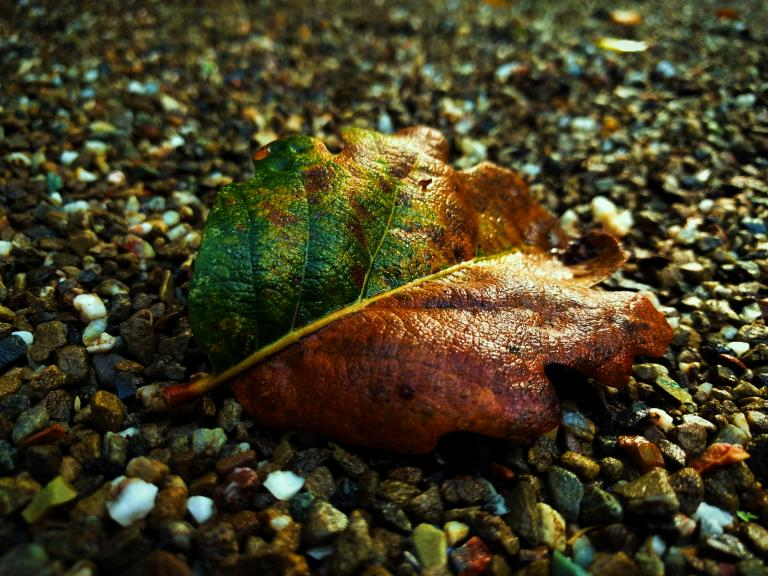 This photo of a green and brown leaf reminds us that life is a series of ups and downs