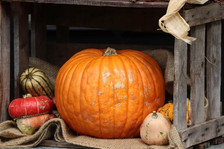 Pumpkin Magick