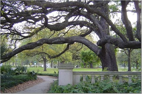 Entrance to Audubon Park on the St. Charles Ave. side. Image by Nicole Youngman.