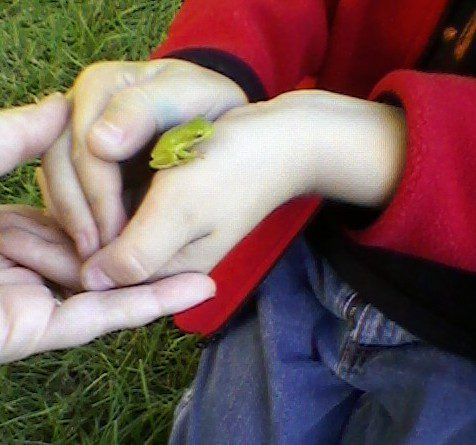Kevin with tree frog. Image by Nicole Youngman.