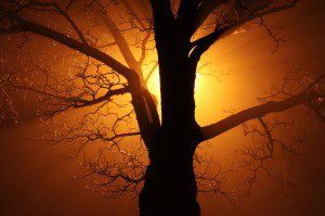 Tree In Fog At Night by Petr Kratochvil. Public domain.