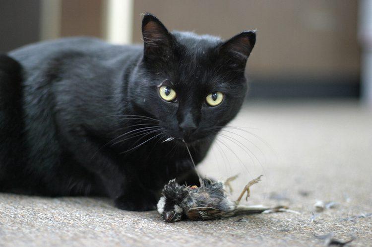 Cat-eating-prey.jpg