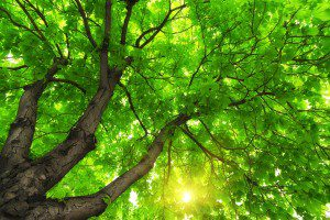 Under big green tree. Image by djgis via Shutterstock.