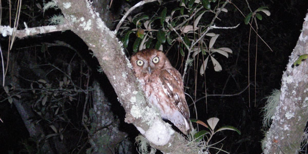 an owl in a tree illuminated by camera flash
