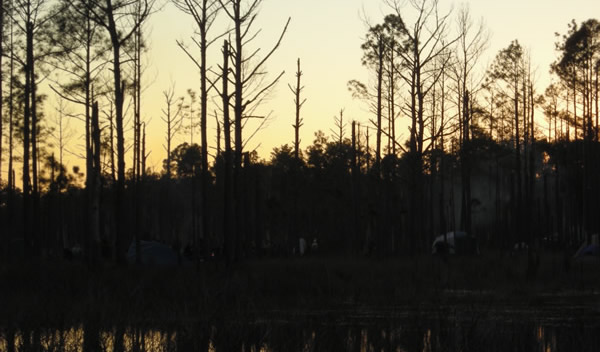 the sun setting behind trees over a lake