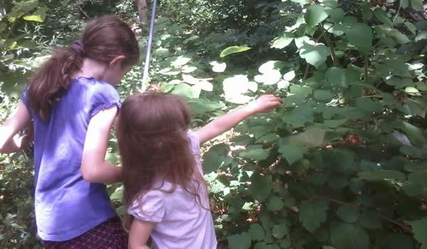 My daughters, gathering berries for Brón Trogain, 2013 / Morgan Daimler