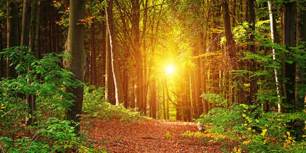 Sunny Forest  / Shutterstock.com