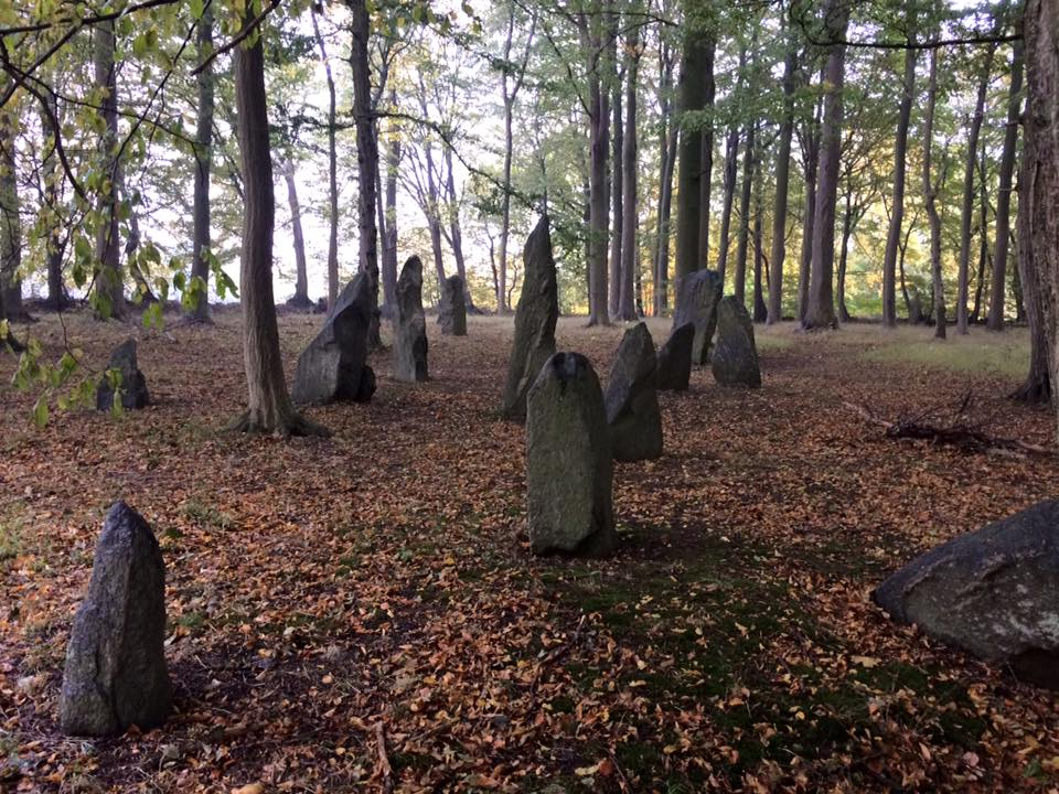 Another photograph of the standing stones in the forest.