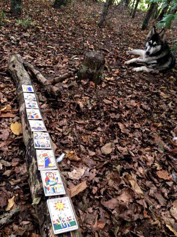 tarot cards arranged end-to-end on a log in a forest