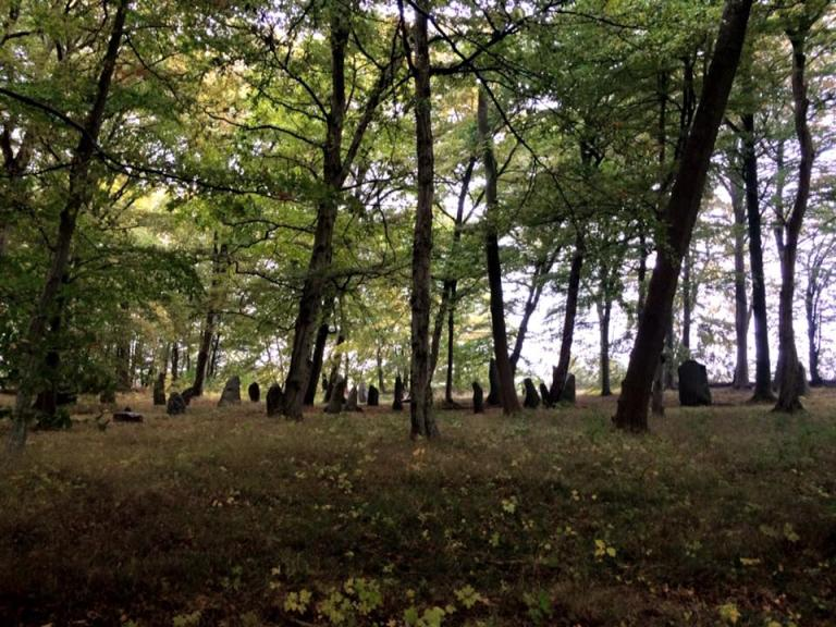 standing stones at a distance in a forest