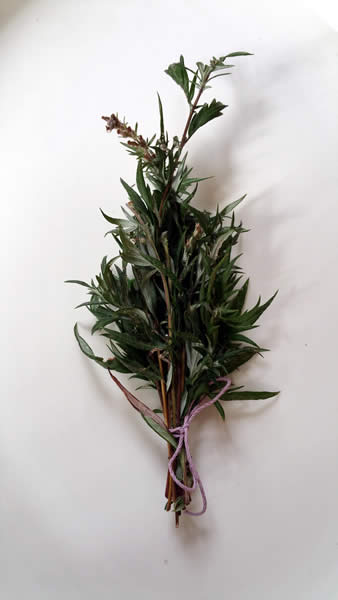 Mugwort / Photo by Anne Duthers
