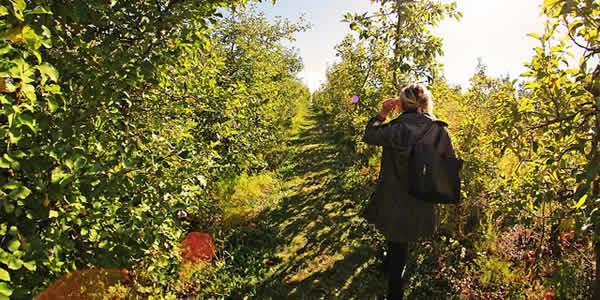 a woman walking through an apple orchard
