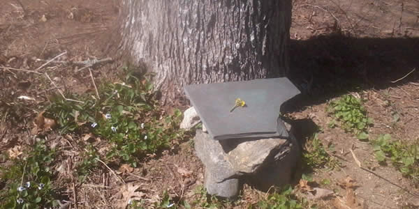 A collection of stones with a flat one on top before a tree