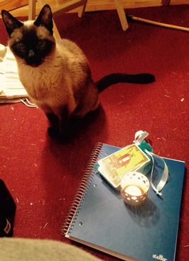 a cat, some taro cards, and a grimoire