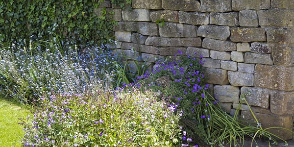 lavender flowers before a limestone wall