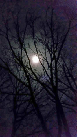 Full Moon / M. Daimler