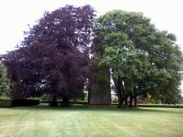 Two Beeches, dark and light / M. Daimler