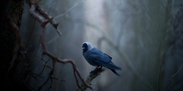 a bird on a branch at dusk