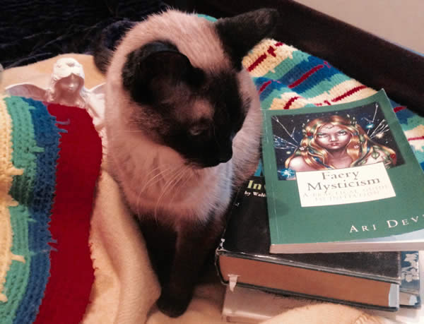 The author's cat next to a few of the books discussed in the article