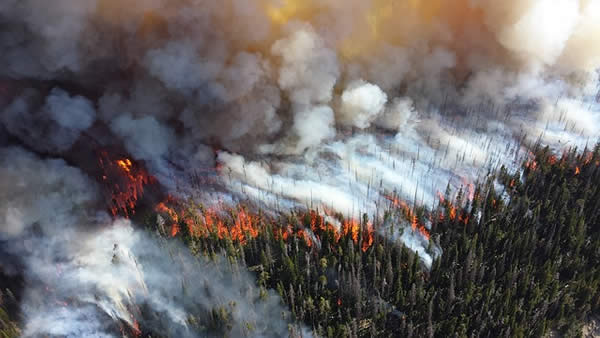 an aerial photograph of a wildfire burning in a forested area