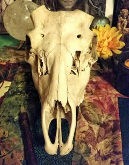 an unadorned skull