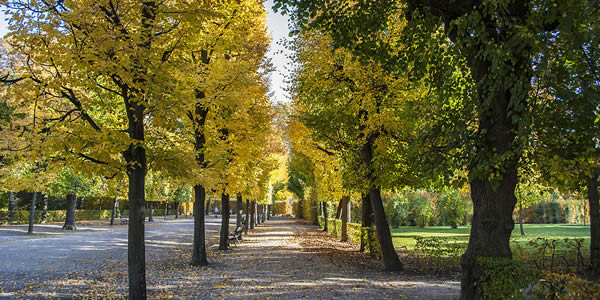 a tree lined street; the leaves on the trees have changed from green to yellow