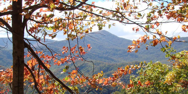 a photograph through autumn leaves of the great smoky mountains