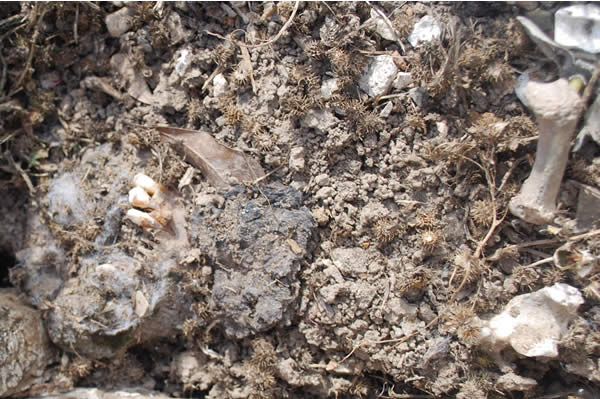 a close-up shot of muddy earth mixed with bits of bone and teeth