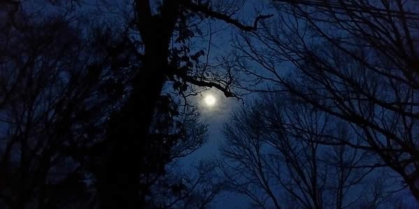 A full -- or nearly full -- moon pictured behind both tree limbs and clouds