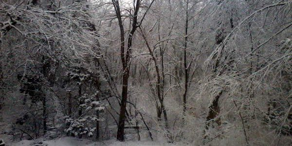 a photograph of winter-clad wilderness