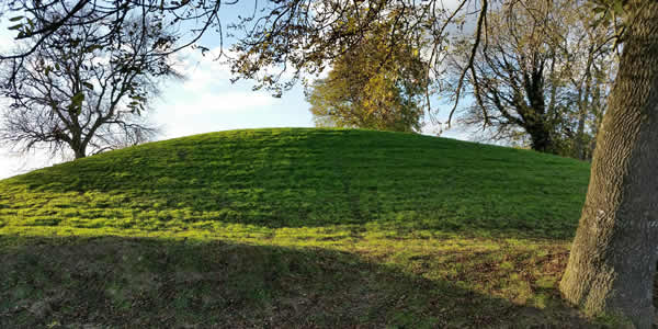 a hill of grass