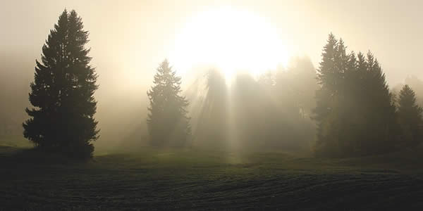 a photograph of a field at dawn with trees in the distance. the sunlight is filtered through the early morning fog
