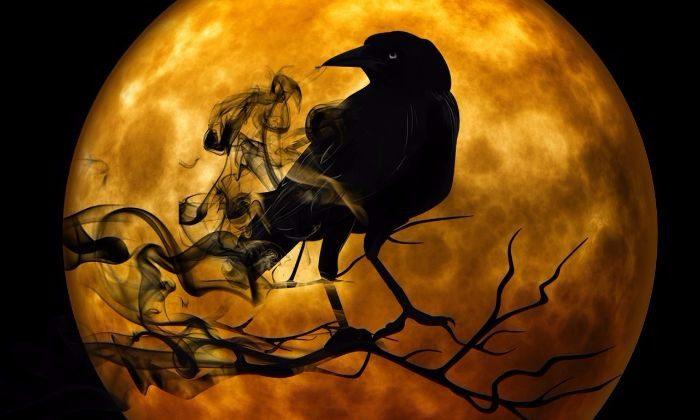 raven-988218_1280 (1)