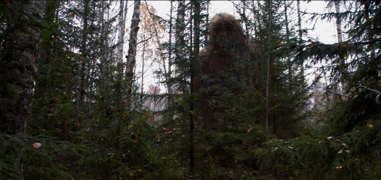 Photo of a Mysterious Forest Giant