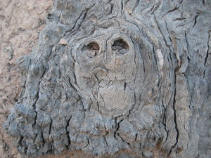 Tree bark face