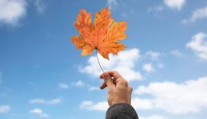 Autumn leaf prediction processing