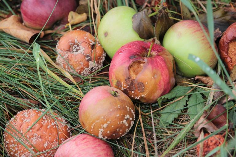 One bad apple can spoil the whole bunch, so bad apples need to be removed as quickly as possible.