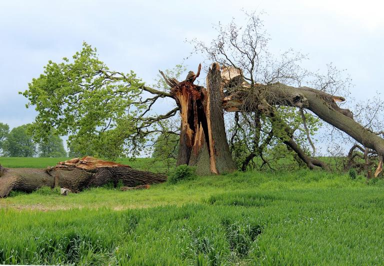 No matter how big and strong a tree may look from the outside, if it is rotten inside, it will eventually break.