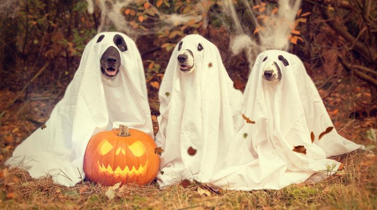 Here we have three embodied dog souls showing their inner ghosts, plus a pumpkin decked out enjoying the holidays.