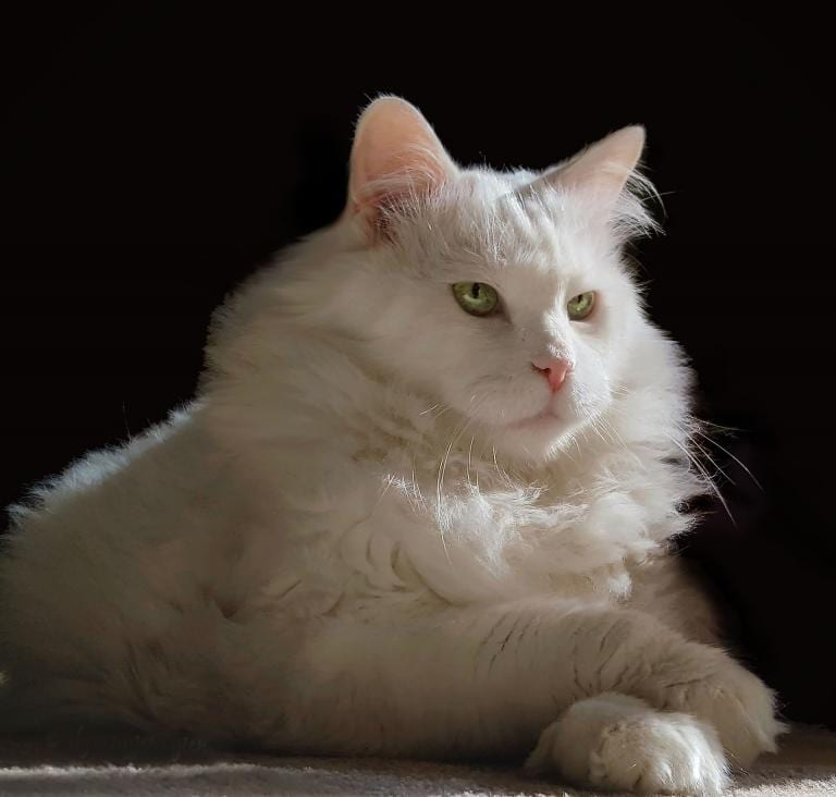 Most cats are confident about their space, their needs, and their desires, and they make no apologies for that.