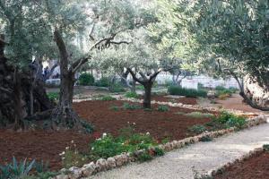 holy week garden of gethsemane