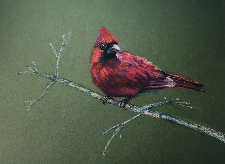 cardinal bird on a branch