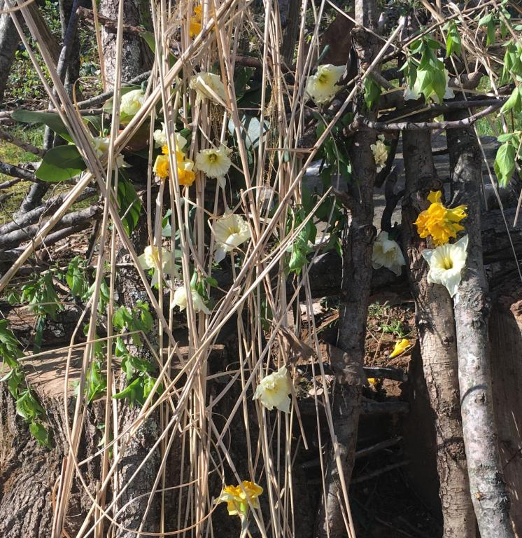 daffodils woven into sticks and twigs