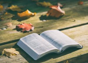 Bible open on table with leaves