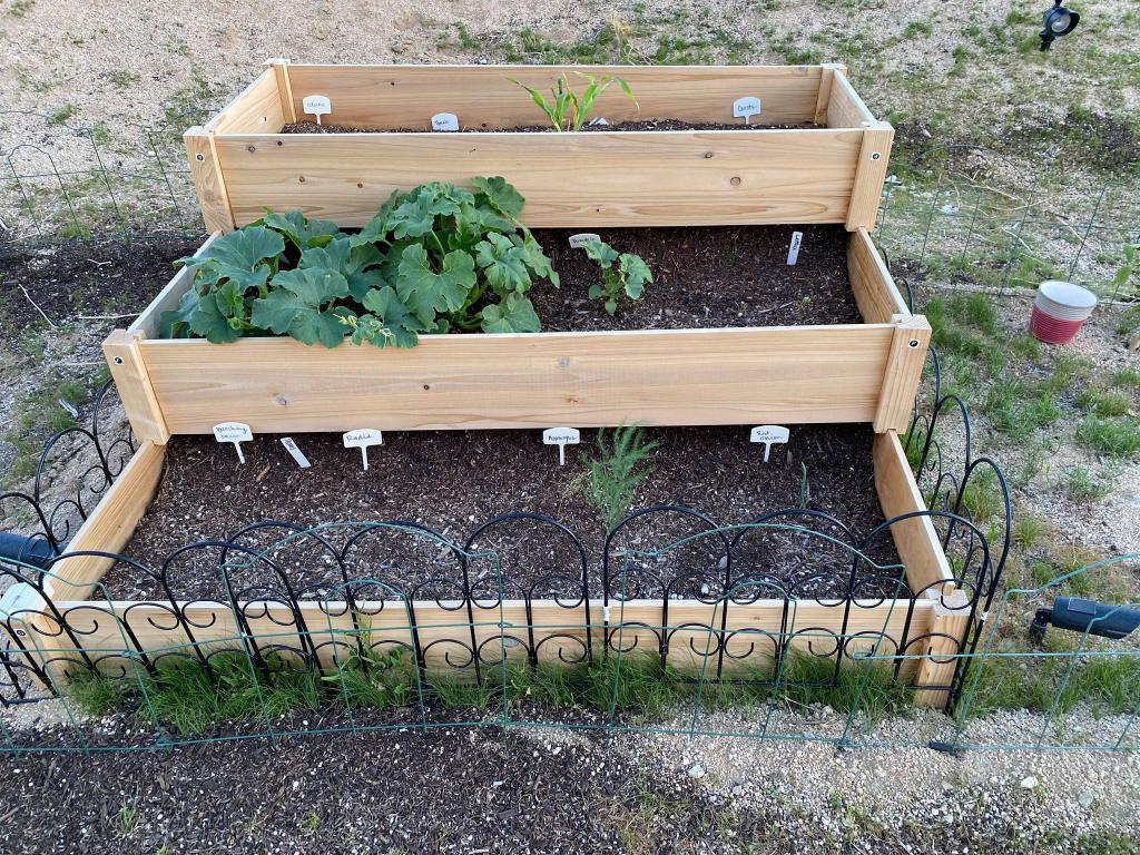 Our raised bed.